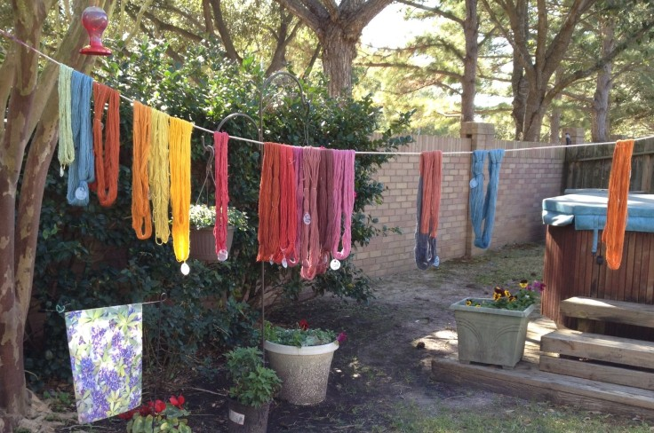 Yarn skeins drying after being dyed in a variety of Natural Dye baths.
